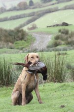 Can I change the way my gundog holds game?