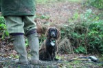 Will deafness end my gundog's working life?