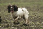 Should you scold a badly behaved gundog?