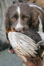Will my gundog make a good marker?