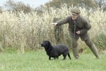 Is my gundog schizophrenic?
