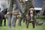 Gundog training at home
