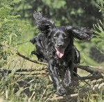 Why isn't my gundog losing weight?